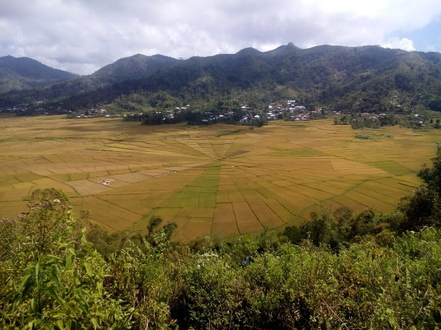 and some spiderweb rice fields