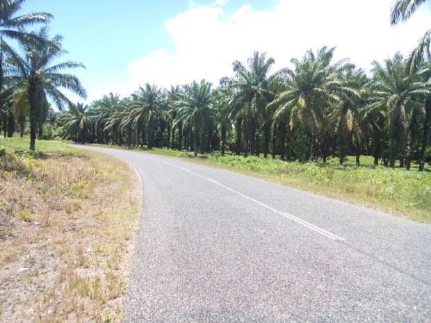 The second day I remember mostly a lot of oil palm plantations. The terrain was also not as flat as the first day but the occasional hill was not too bad either. Doing my 90 km that day was not so difficult even if I had to spend two hours waiting out a rain shower around noon.