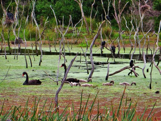 kai iwi birds