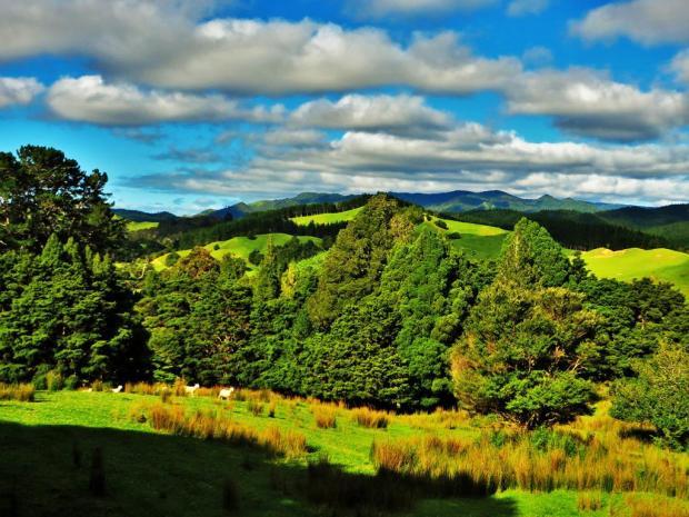 lamb landscape