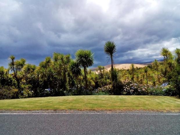 NZ_Leg222